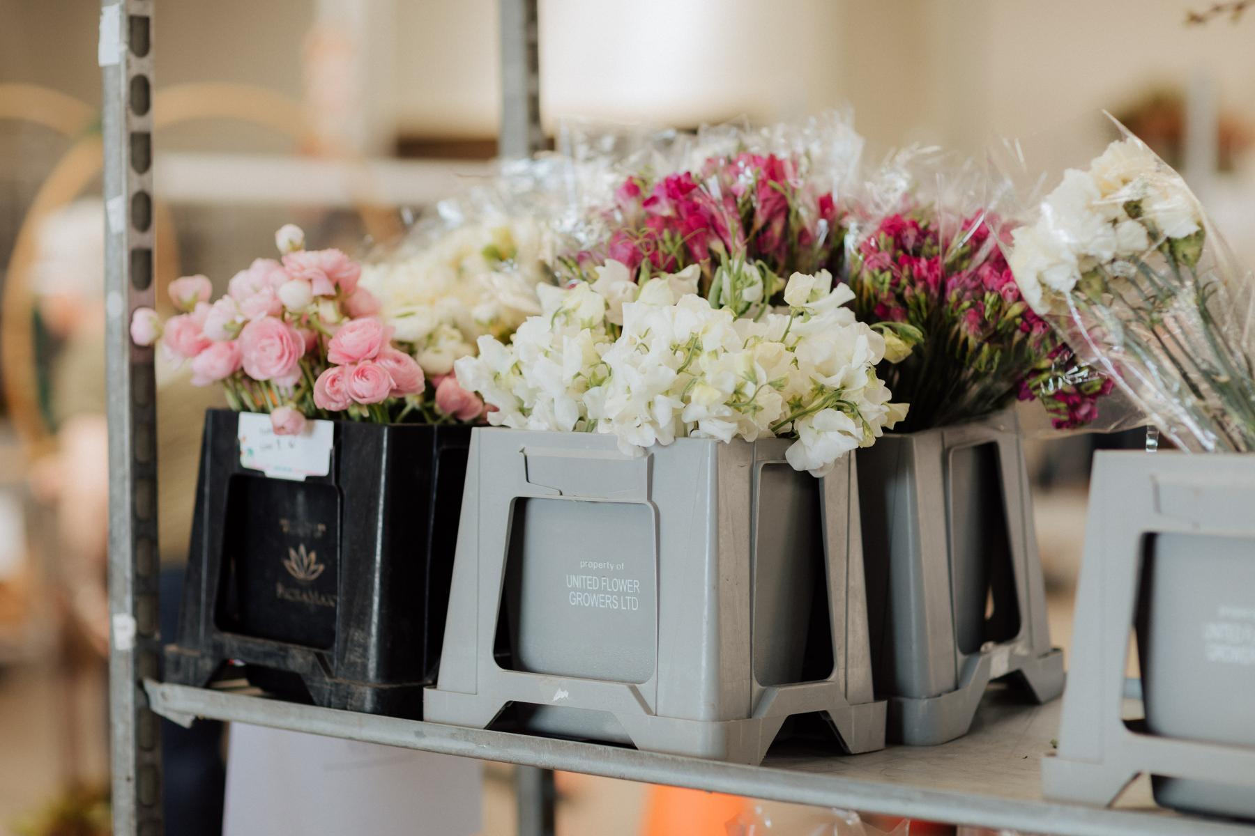 NZ_Flowers_Week_20196-large